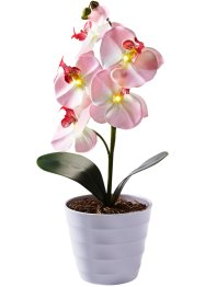 Led-orchidee, bpc living, roze